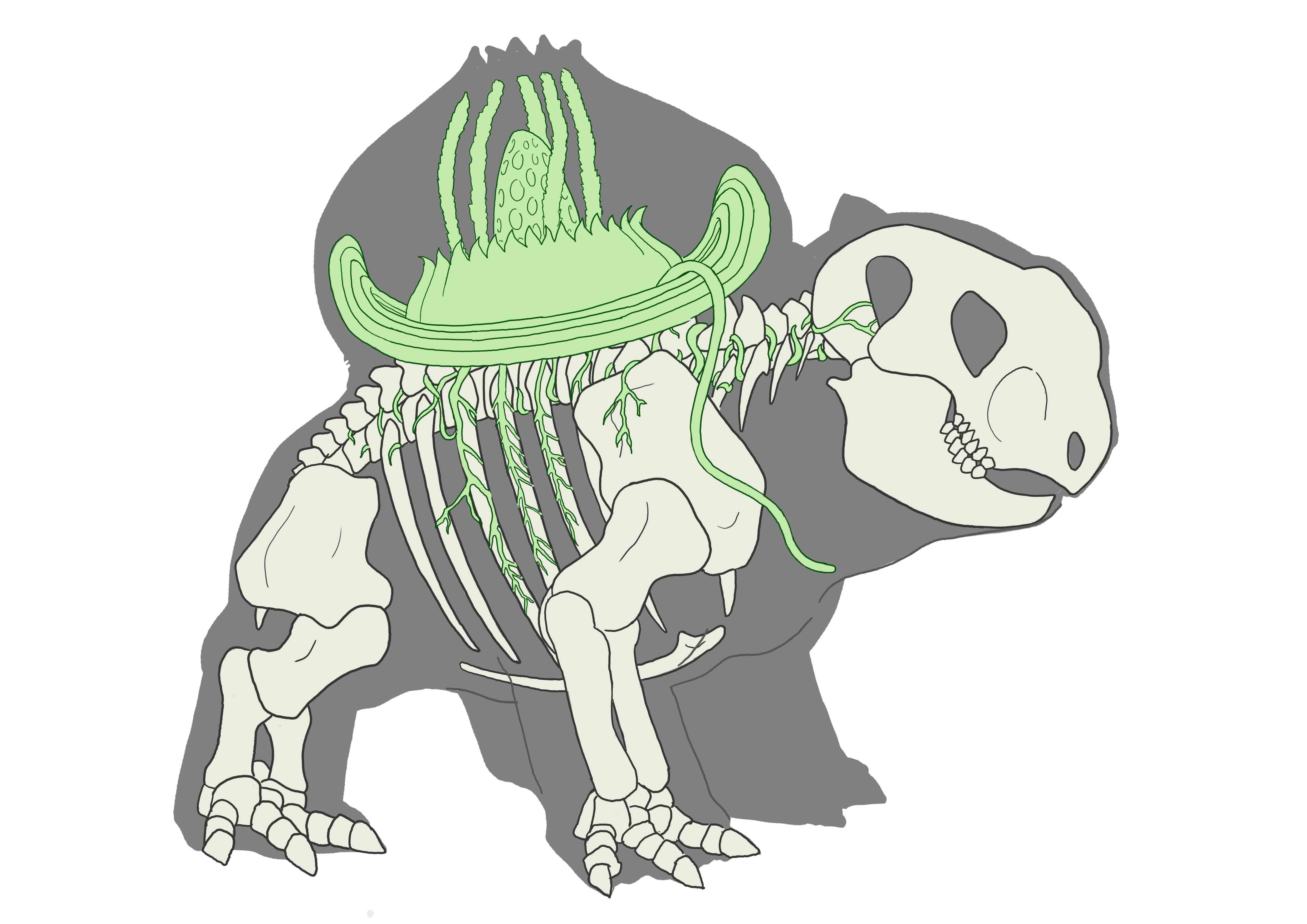Bulbasaur Evolution Chart Copyright   Joshua Dunlop