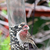 The Plight of Red House Finches