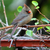 Cam (my visiting cardinal) and The Kiwi Vine Offer Thanks