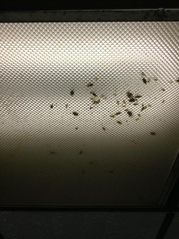 roaches!