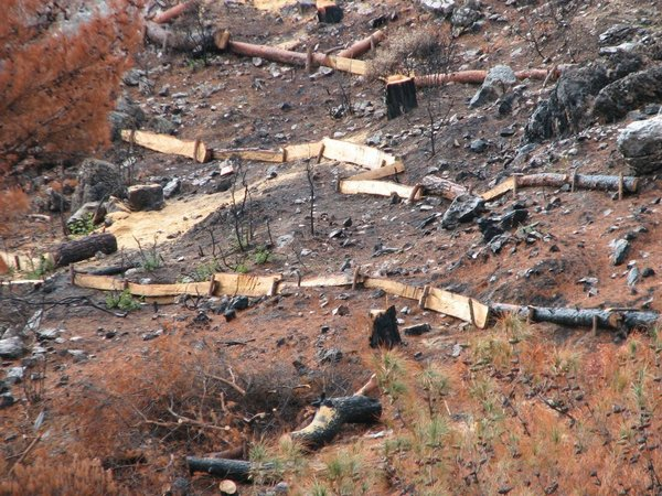 In an intelligent use of dead wood, burned trunks are split and laid so that they stop soil and seeds washing down the damaged hillsides when it rains.
