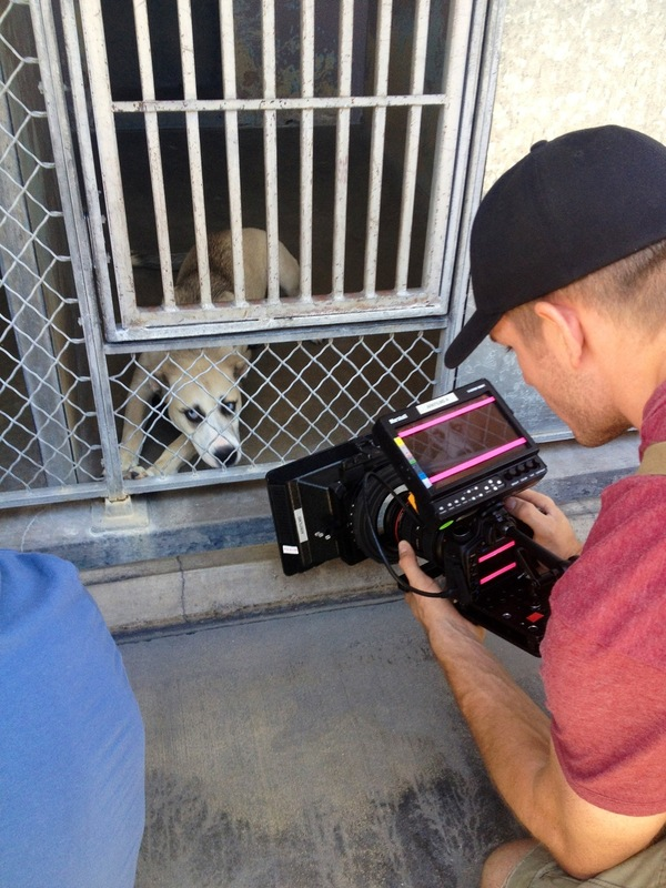 Cinematographer Edd Lukas filming a shelter pup at the Agoura Shelter