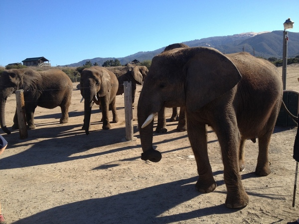 Family of Elephants in Northern California