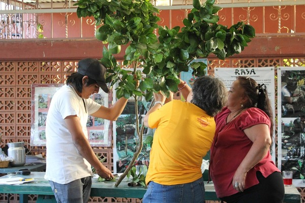 An open and weekly workshop at Unitierra on urban agriculture, this one about tree grafting. Unitierra (University of the Earth) is in Oaxaca, Mexico (photo taken December 2012).