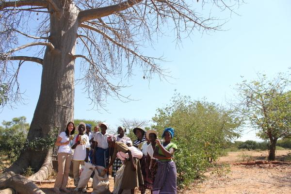 Sara and Baobab harvesters in Zimbabwe