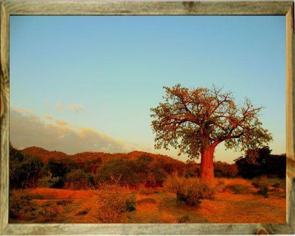 Framed Baobab Print