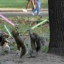 20130110091814-squirrels-light-sabres