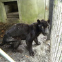 20120730152310-lucky_boy_11_days__post_rescue