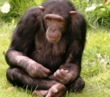 20121031095204-indiegogo_chimp