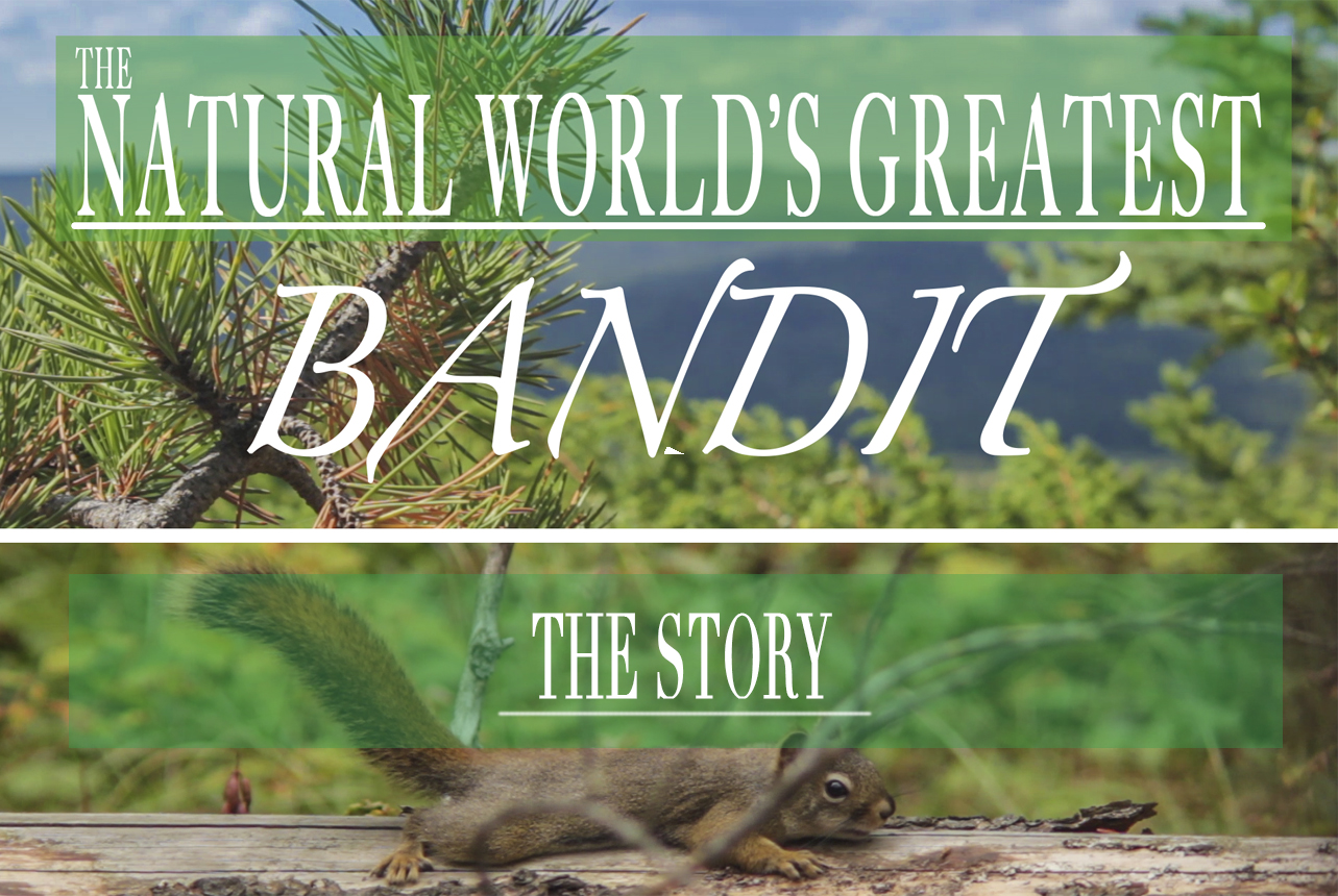 The Natural World's Greatest Bandit | Indiegogo